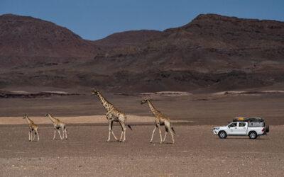 Namibia podczas pandemii 2020/21