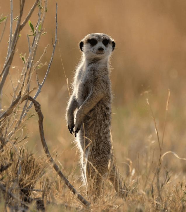Botswana zwierzęta
