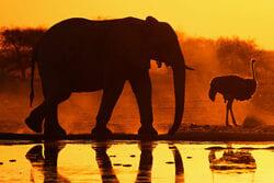 slon namibia