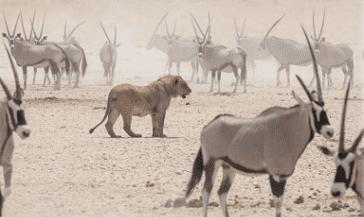 zwierzęta Namibia