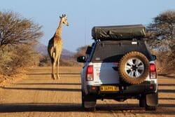 zyrafa namibia